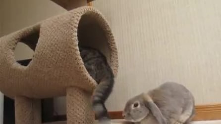 """Tenerissomo coniglio """"schiaffeggiato"""" dal gatto"""
