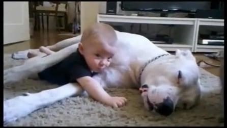 Tenerezza è... un bimbo e il suo dogo argentino, uniti in un lungo abbraccio