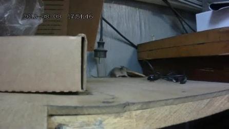 C'è sempre una via, il topolino è testardo e non si arrende