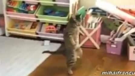 Gatti che si comportano come umani, una divertente compilation
