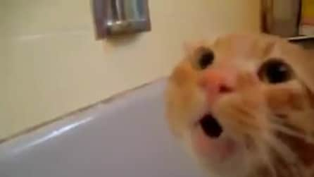 Un gatto che si ribella al bagnetto, troppo esilarante!