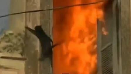 Ecco come i gatti riescono a scappare da un incendio
