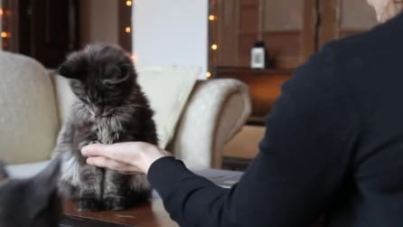 """Ecco come un gatto impara """"a battere il cinque"""""""