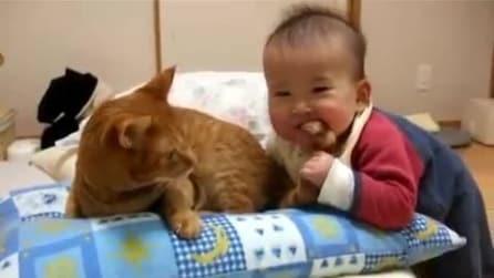 Bimba monella cerca di mangiare la coda del suo gatto!