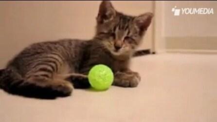 Gattino cieco gioca per la prima volta con la pallina