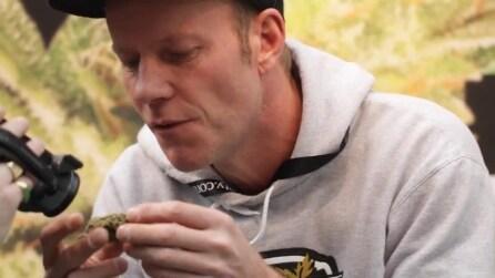 25th HIGH TIMES Cannabis Cup Highlights