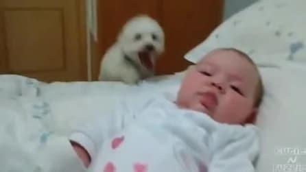 Riuscirà questo cucciolo a raggiungere il suo amichetto sul letto?