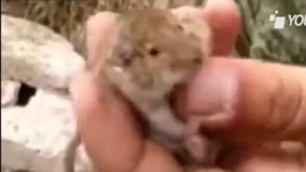 Il disgustoso snack di un soldato: un topolino
