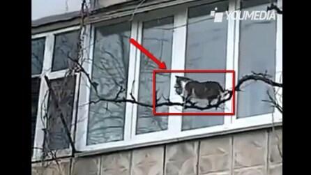 Coraggiosa mamma gatto: sfida le leggi della fisica per mettere in salvo il suo piccolo