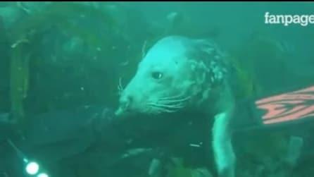 La foca che fa compagnia al giovane sub durante l'immersione: amicizia negli abissi