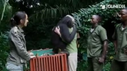 La commovente storia di Wounda, lo scimpanzé tornato alla vita