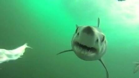 Ecco cosa significa essere preda di uno squalo