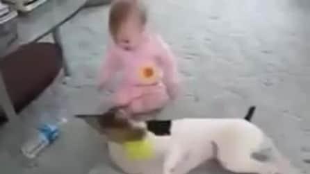 Un cane e la sua piccola padroncina giocano insieme