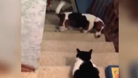 Cani che temono gatti, una simpaticissima compilation!