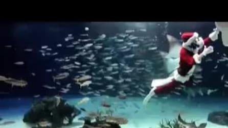 Babbo Natale nuota tra i pesci... nell'acquario di Tokyo