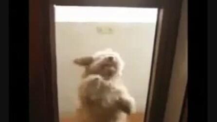 Il cagnolino ballerino di salsa
