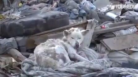 Cagnolino abbandonato tra i rifiuti viene salvato