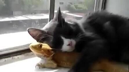 L'amore tra un gatto e un iguana, dormono insieme abbracciati