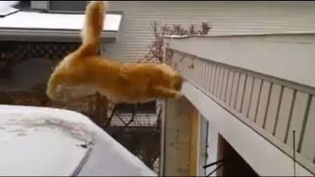 Gatto maldestro, prova il salto, ma scivola sul ghiaccio!