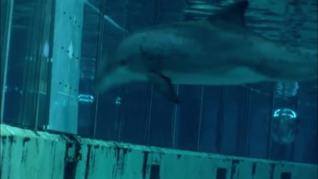 Il delfino super intelligente, risponde alle domande e sceglie il suo snak preferito