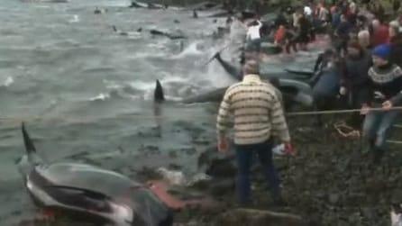 La tradizionale e terrificante mattanza delle balene alle Faroe Islands, praticata da 400 anni