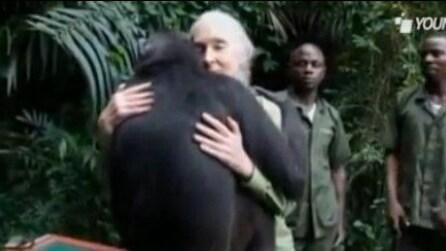 Wounda, la femmina scimpanzè che abbraccia la donna che l'ha salvata