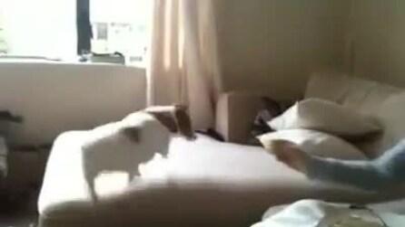 Cane mangia un limone, ecco la sua divertente reazione
