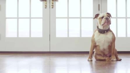 Voyce, il Fit-bit per monitorare la salute e l'attività dei cani