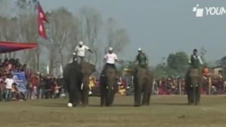 Nepal, elefanti giocano a calcio