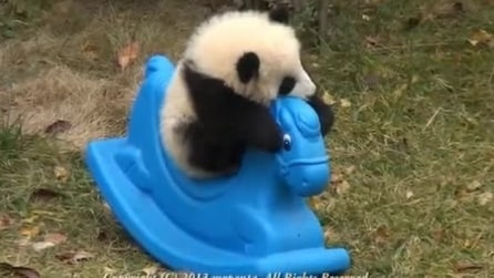 Un piccolo panda gioca su un cavallino a dondolo