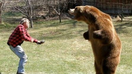 Avere un orso di 650 kg come animale domestico? Non è fantasia!