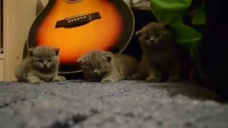 3 piccoli gattini ipnotizzati, non sono adorabili?