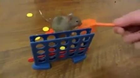 """Il topolino super intelligente che gioca a """"forza quattro"""""""