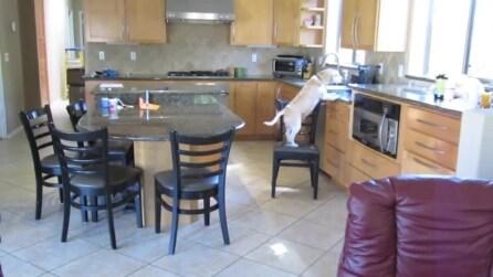 """Cosa fa il mio cane quando non sono a casa? """"Ruba"""" il pollo dal forno"""