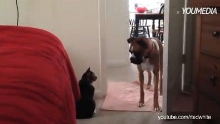 """""""Non puoi passare"""", cani bloccati e impauriti dai gatti"""