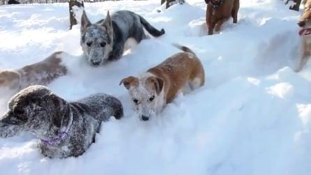 Finalmente all'aperto dopo la tempesta di gelo, i cani sono super felici