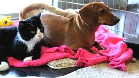 Cane abbandonato e gatto paralizzato, amici per la pelle