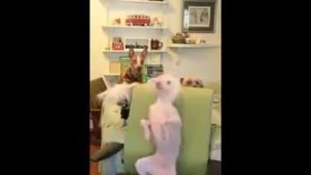 Il cane che adora la musica, si scatena in una danza sfrenata