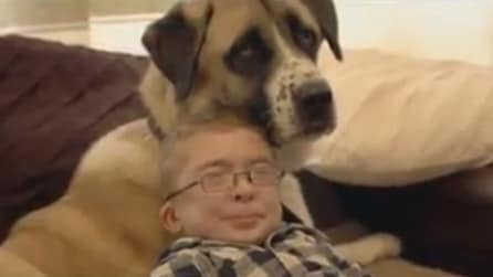 La storia di un'amicizia speciale tra Owen e il suo cane guida Haatchi