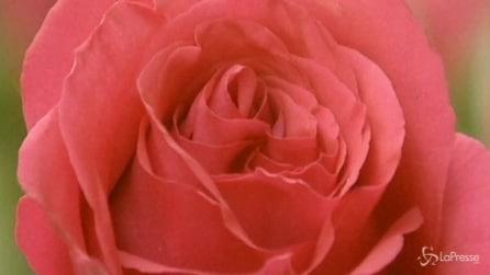 San Valentino in Cina: 99 coppie festeggiano le nozze d'oro in un parco botanico