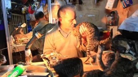 Ecco chi a Tarlabaşı si prende cura di cani e gatti, nello storico quartiere che il Governo sta demolendo