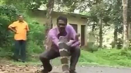 Come catturare un cobra reale