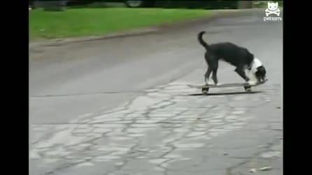 Il cane che adora lo skateboard