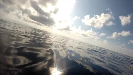 Ecco cosa si prova a nuotare insieme ai delfini