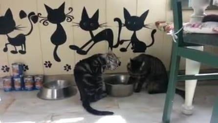 Vi pare normale che dei gatti bevano così l'acqua?