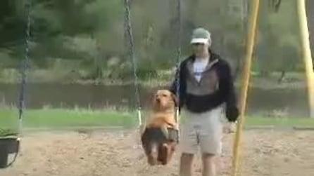 il cane che ama andare sull'altalena