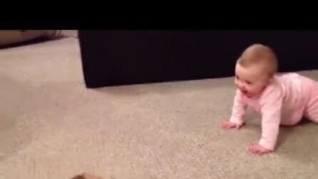 Il cagnolino che gioca con il suo piccolo padroncino