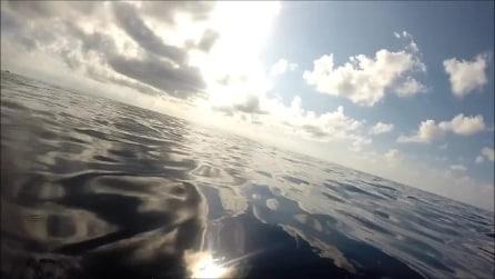 Delfini nuotano felici nell'oceano: così da vicino non li avete mai visti