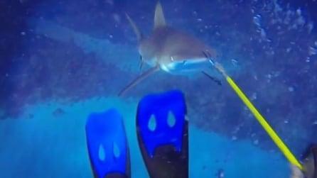Faccia a faccia con uno squalo: tanta paura per il sub