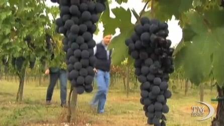 """Usa e domini web, Coldiretti: """"Facciano passo indietro su """".wine"""""""